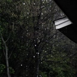 Rain drops falling from trees and roof.